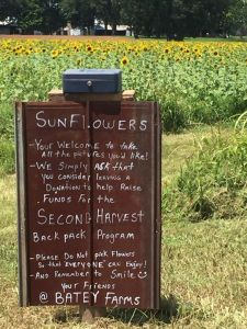 8-13-15 Batey's Farm sign for sunflowers