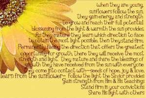 sunflower info